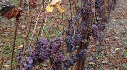 Harvest's Last Hurrah