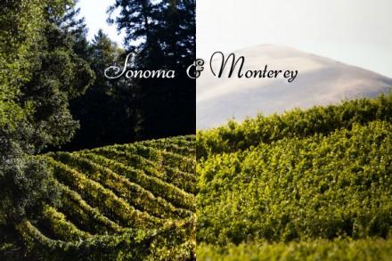 Ask Elizabeth: Sonoma & Monterey