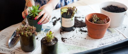 DIY: Wine Bottle Succulent Planters