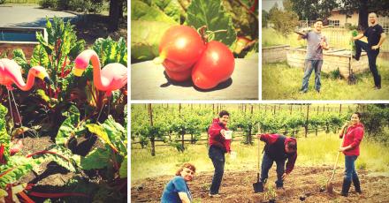 Growing Vegetables, Friendships at the La Crema Employee Garden