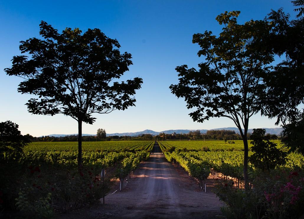Saralee's Vineyard