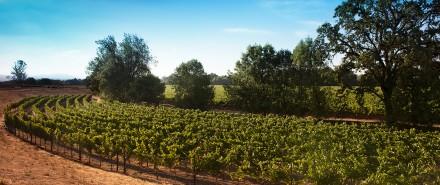 Saralee's Vineyard Part 1: A Sweet Spot for World-Class Grapes