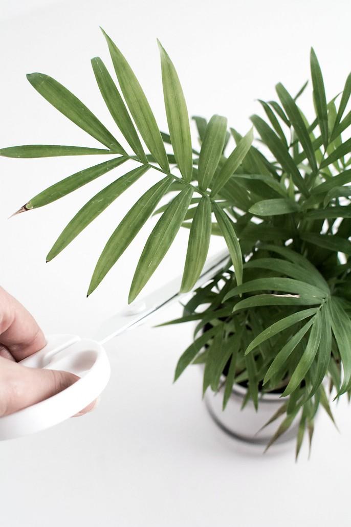 Palm leaf for DIY Palm Leaf Napkins
