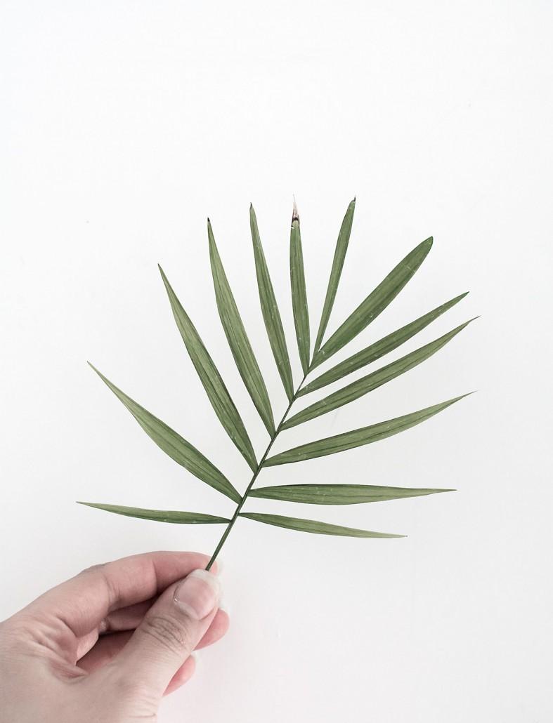 Flattened palm leaf for DIY Palm Leaf Napkins