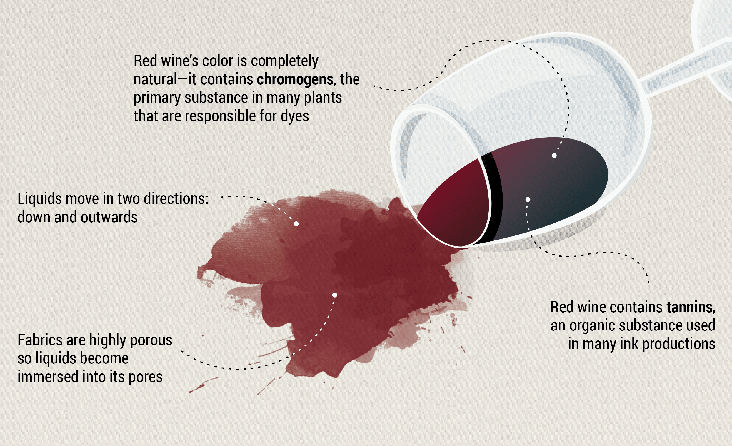 Anatomy Of Red Wine