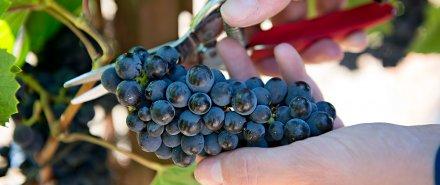 La Crema Promotes Craig McAllister to Head Winemaker hero image
