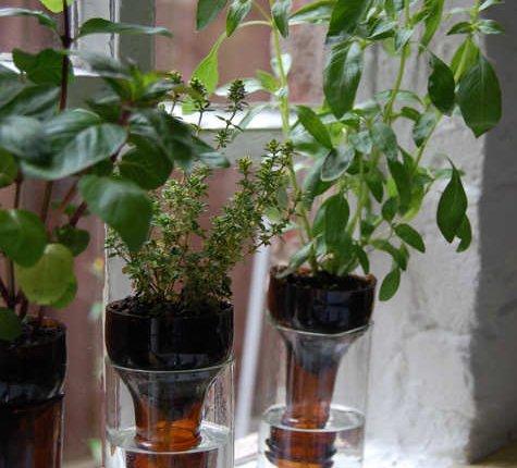 DIY Wine Bottle Decor: Self-Watering Wine Bottle Herb Garden